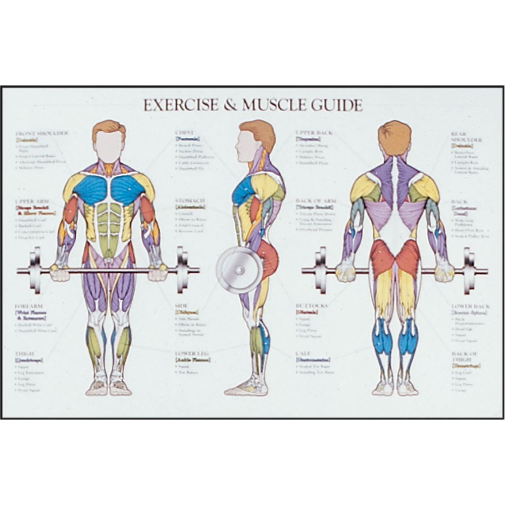 Workout Diagram Muscle – Blog Dandk