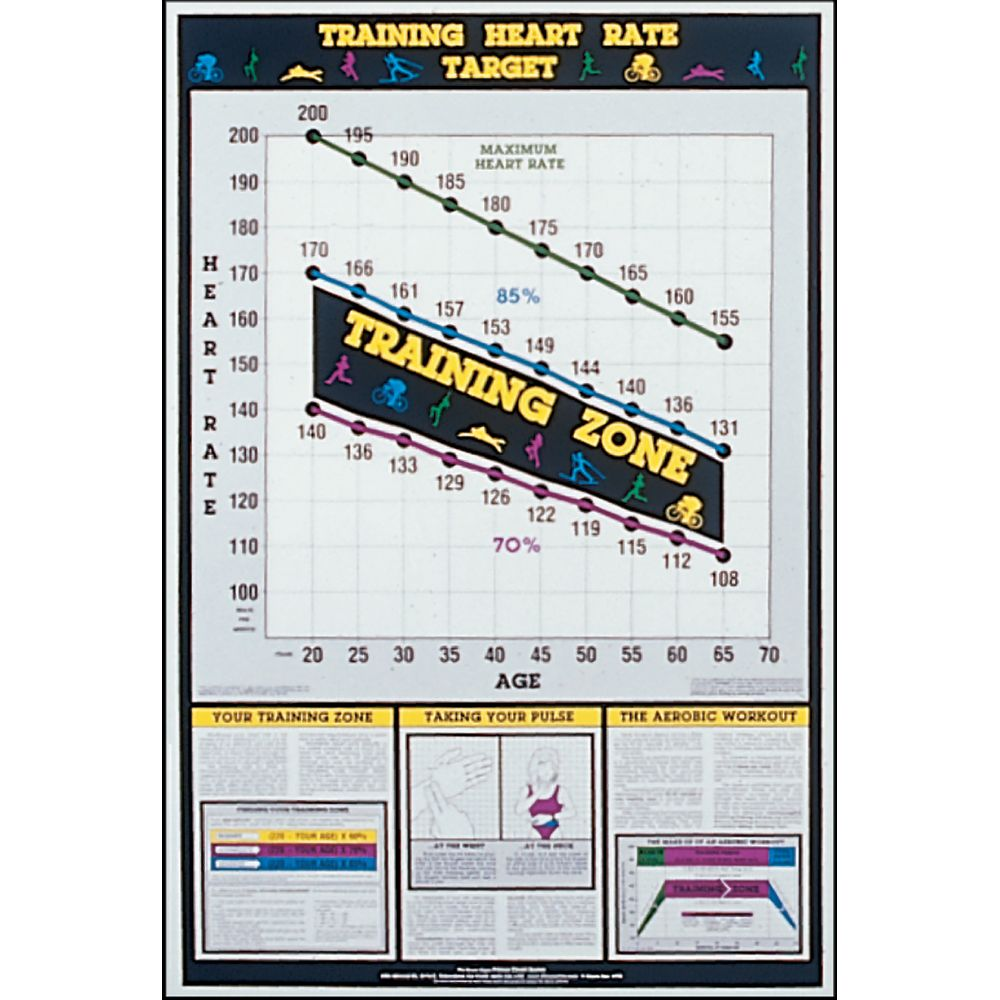 Laminated Exercise Charts Show Muscles Used And Proper Power Systems